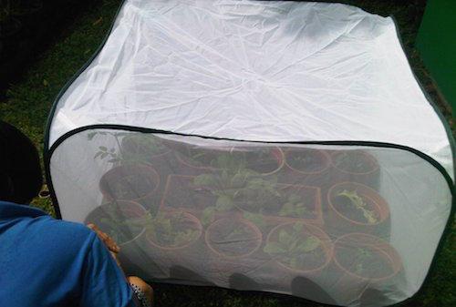 Mini Green House untuk Kebun Yang Mungil